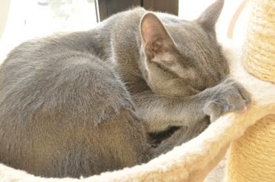寝ているネコ