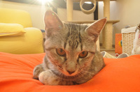 cat-001_640.jpg