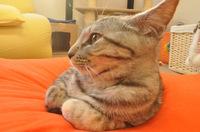 cat-002_640.jpg