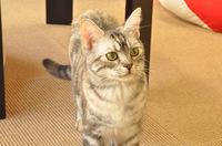 cat-003_640.jpg