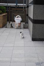 cat-004_640.jpg