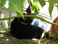 cat-005_640.jpg