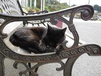 cat-007_640.jpg