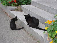 cat-008_640.jpg