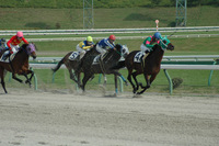 horse-001_640.jpg