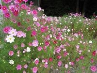 花や植物の無料画像